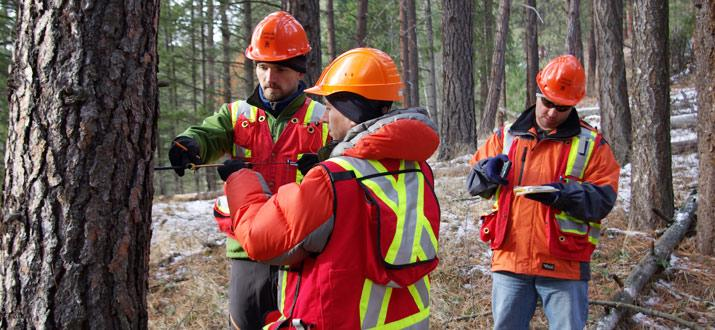 Selkirk College students studying forestry