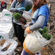 26 students planted more than 10,000 trees and dove deeper in the silviculture aspect of forestry.