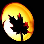 """Maple & Light, Canada's Pride"" by Kamaalbir Singh"