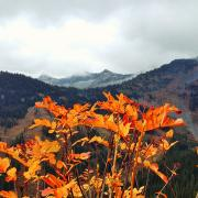 """Seasons at Whitewater Ski Resort"" by Nicola Mitchell"